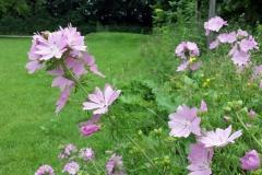20160624_133502_bloemenJuniKruidenstrook